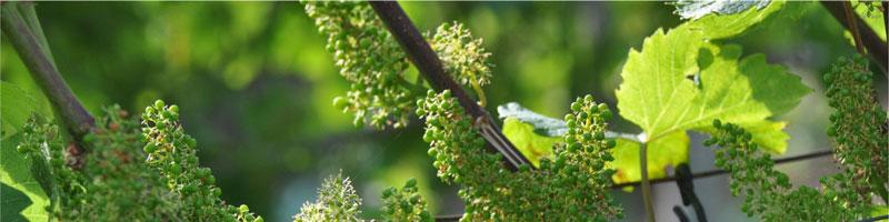 Lezing 'wijnbouw in Limburg' door Wim Gloerich